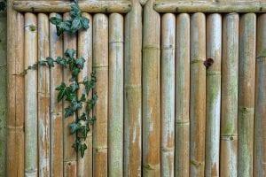 Bamboe in de tuin