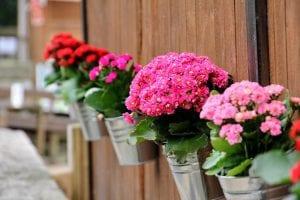 Planten ophangen aan de muur