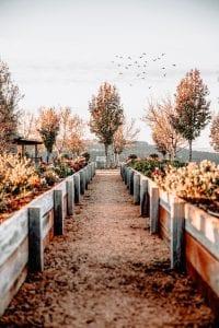 Tuin met herfstkleuren