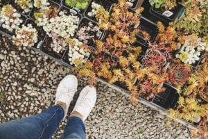 Tuin met makkelijke tuinplanten