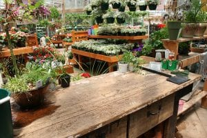 Voorjaarsplanten kopen bij het tuincentrum